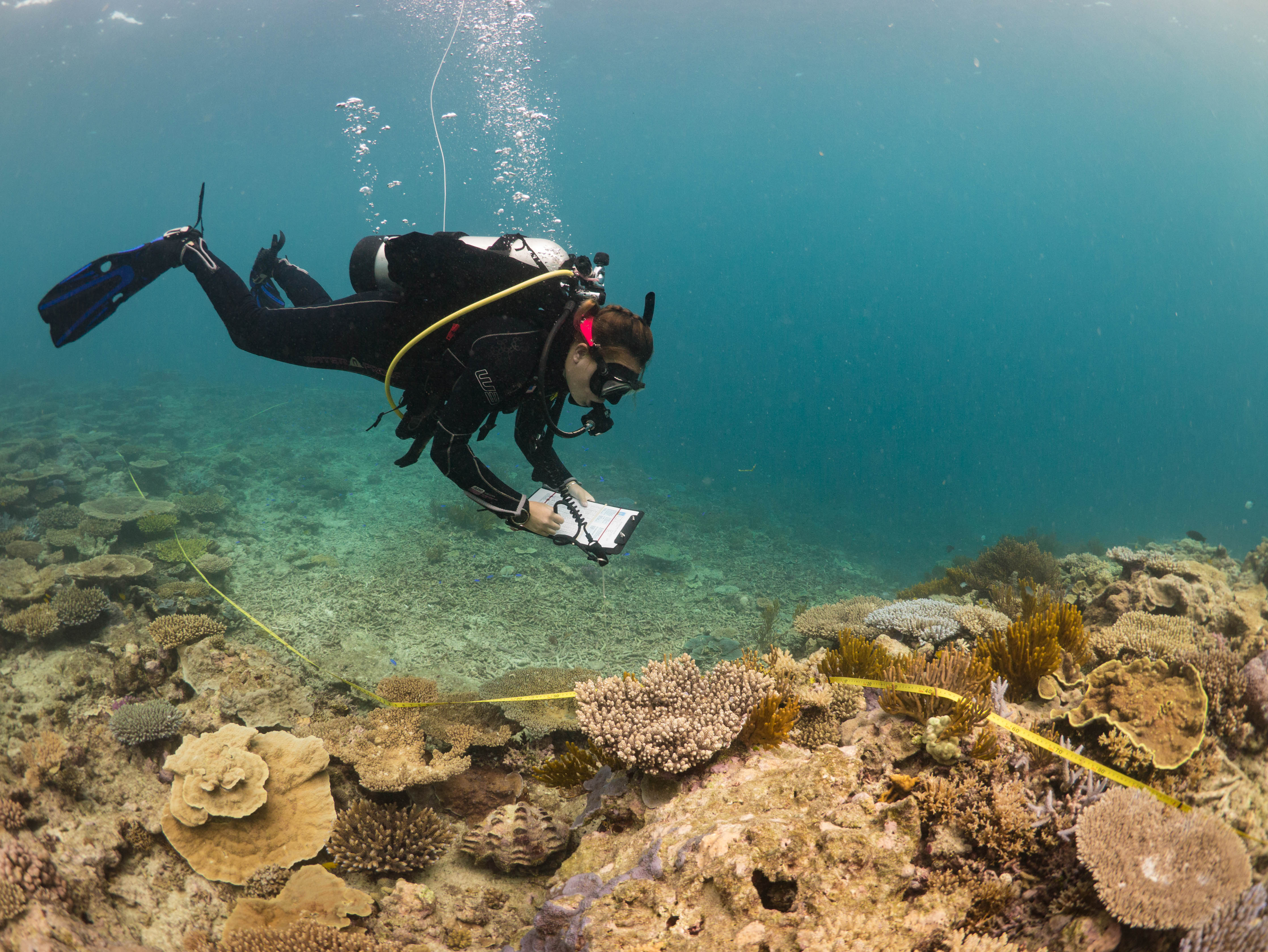 Coral Grotto Surveyor in Action credit Jodi Salmond