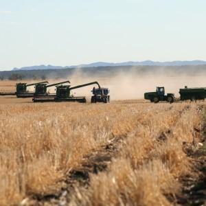 Wheat © FBA (2)